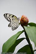 St. Martin butterfly farm