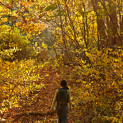 A woman walks on a woods road in the forest at Elmwood Farm in Hopkinton, Massachusetts. Fall.