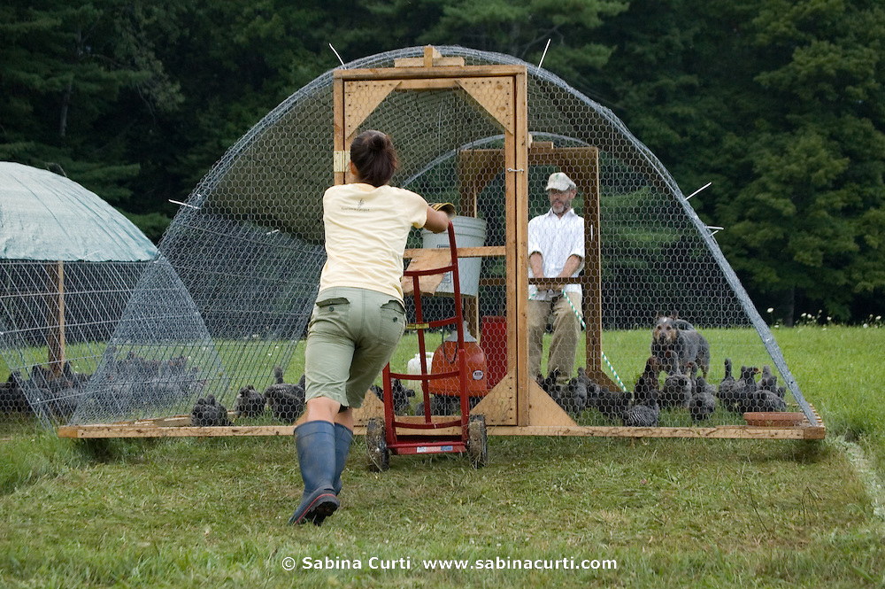 Dominic Palumbo moves a chicken coop to a new spot at Moon in the Pond farm, Sheffield, MA