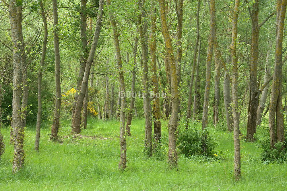 a planted wild looking young forest