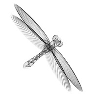 X-ray image of a dragonfly (black on white) by Jim Wehtje, specialist in x-ray art and design images.