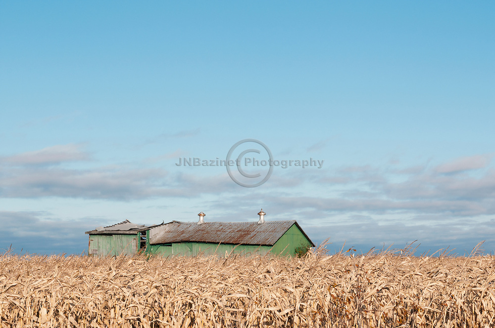 Old green barn in a dry corn field