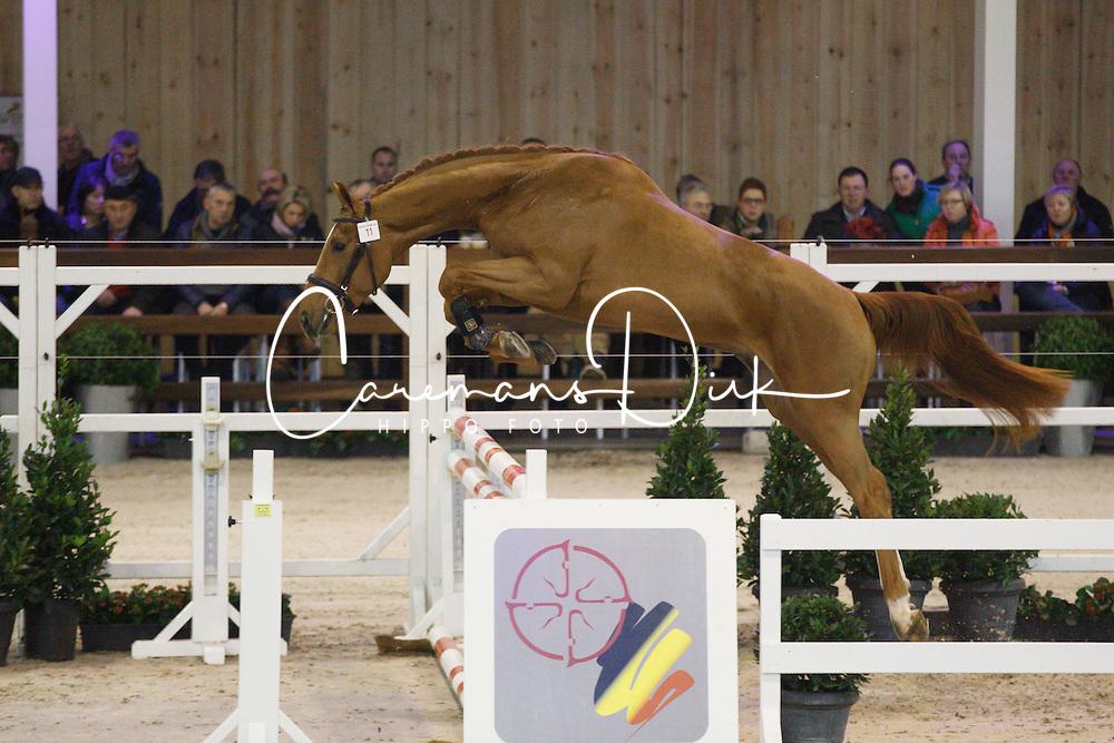 011 - Matisse De Mariposa<br /> Hengstenkeuring BWP - Azelhof - Koningshooikt 2015<br /> &copy;  Dirk Caremans