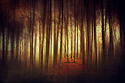 Abstract forest scene in evening light