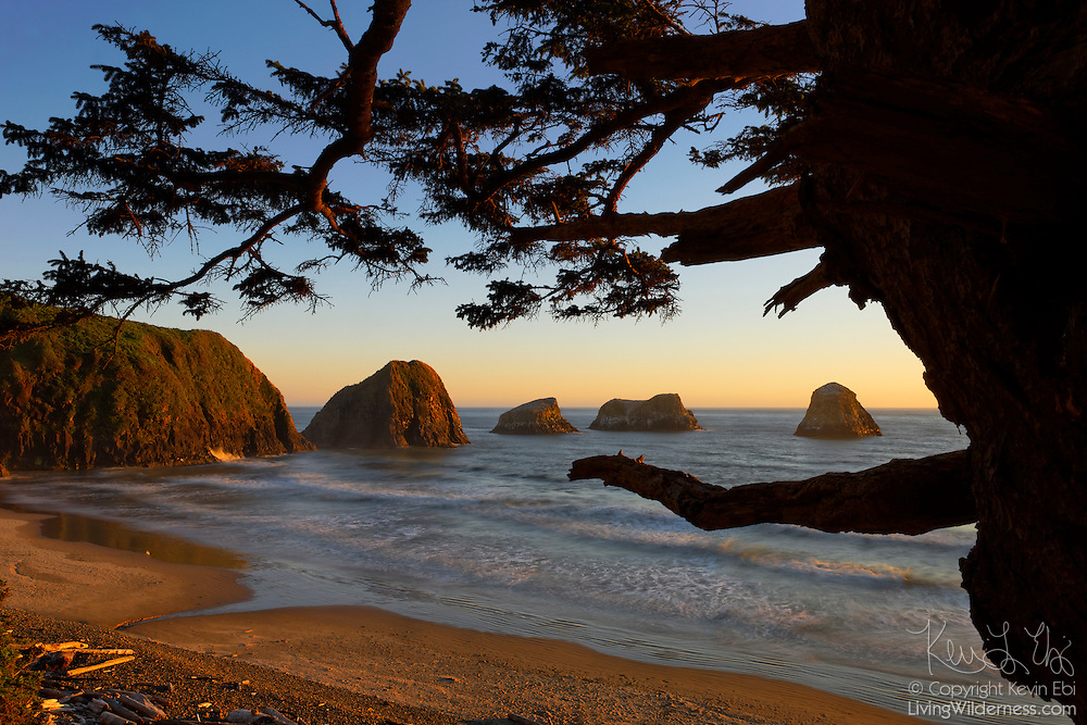 The setting sun lights up the cliffs of Chapman Point, located on the northern Oregon coast near Cannon Beach. Crescent Beach, a relatively remote part of Ecola State Park, is visible in the foreground.