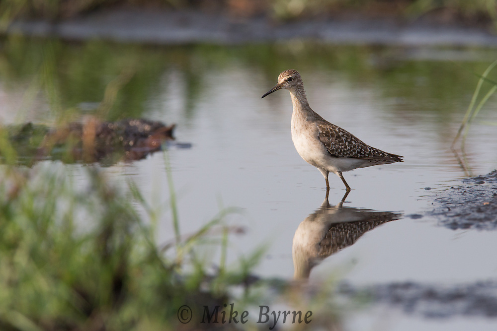 Unknown bird in Chobe National Park, Botswana.