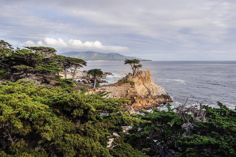 The Lone Cypress, a prominent landmark along Seventeen Mile Drive, Carmel, CA