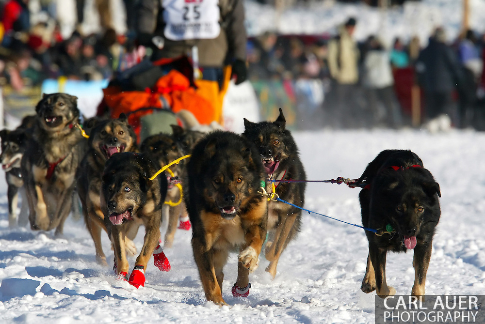 3/4/2007:  Willow, Alaska -  While barking and baring their teeth, the dogs of Rookie Richard Hum of Talkeetna, AK are excited to no longer be held back and free to start the 1049 mile race to Nome in the 35th Iditarod Sled Dog Race