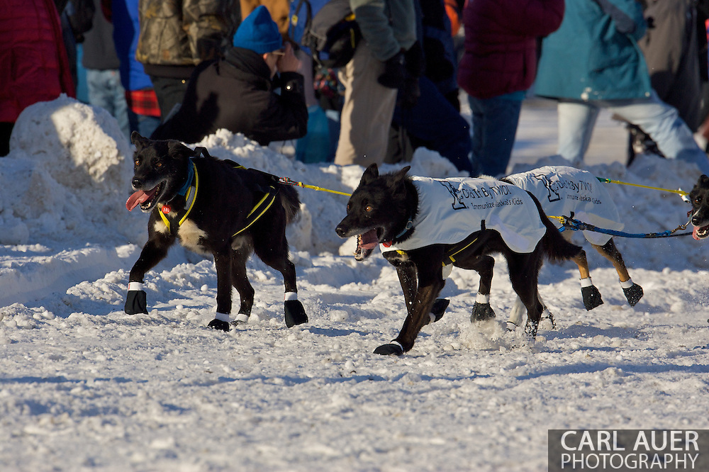 March 7th, 2009:  Anchorage, Alaska: The lead dogs of Gerry Willomitzer of Whitehorse, Yukon, Canada at the start of the 2009 Iditarod race.