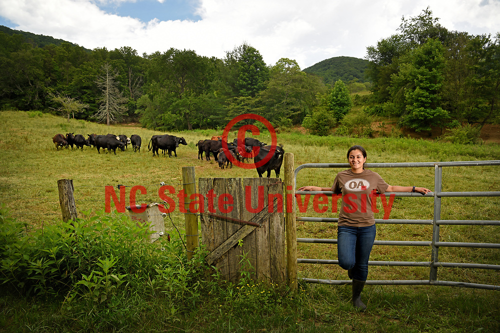 CALS student Selena Ibarra and cattle at Hickory Nut Farm in Buncombe County.