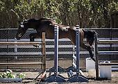 Horse No 53