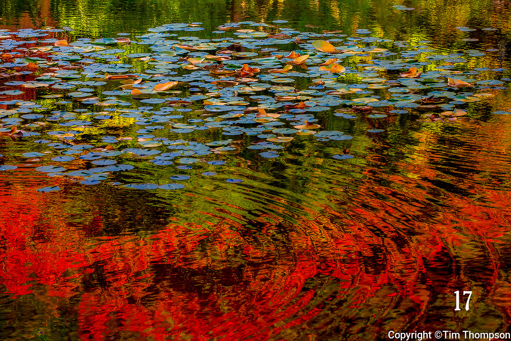 reflections of fall foilage on pond with lily pads