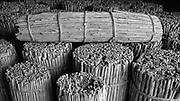 Sri Lanka.<br /> Sticks of cinnamon in a warehouse, for export.