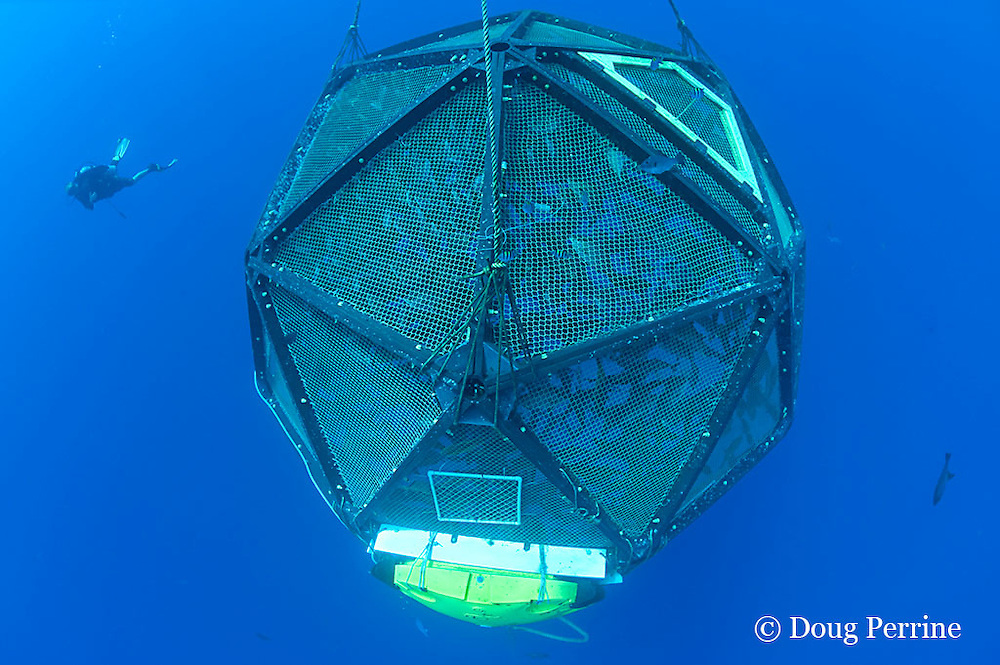 diver examines drifting, unanchored underwater fish cage or aquapod, used for open ocean fish pen aquaculture by Kampachi Farms LLC, holds Kona kampachi, Seriola rivoliana, also known as Hawaiian yellowtail, kahala, or almaco jack, Kona Coast, Hawaii Island ( the Big Island ), Hawaiian Islands ( Central Pacific Ocean )