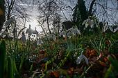 2020 Uffington Church Snowdrops