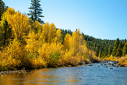 """Little Truckee River in Autumn 2"" - Autumn photograph of yellow cottonwood trees along the Little Truckee River near Stampede Reservoir."