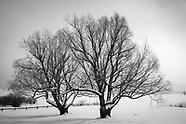 Black and White Treescapes