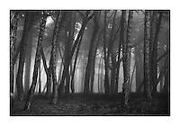 Trees in fog in Dublin's Phoenix Park Pic:Marc O'Sullivan