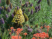 Purple, Yellow Orange Flowers, Plants, Green