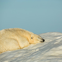 Canada, Nunavut Territory, White Island, Polar Bear (Ursus maritimus) sleeping on sea ice in Frozen Strait along Hudson Bay