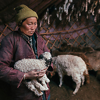 Mongolia. Uvs province, 2016.<br /> Bayankhand Myagmar, 50, inside of her ger. Because of the cold weather she has become afraid to let the goats stay outside overnight. Every afternoon she brings the most vulnerable goats inside her ger. She has lost more than 400 animals because of the dzud this year.