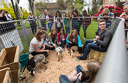 Therapy dogs and baby goats visit with students leading into final week at PLU, Thursday, May 18, 2017. (Photo: John Froschauer/PLU)