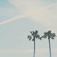 Two palm trees in Santa Monica, California