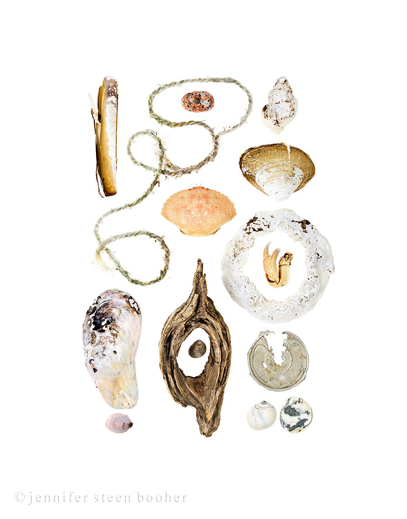 From top to bottom, left to right: Row 1: Razor Clam (Ensis directus), lobster trap rope, Horse Mussel (Modiolus modiolus), Common Slipper Shell (Crepidula fornicata)  Row 2: pink granite beach stone, Rock Crab (Cancer irroratus), driftwood, Common Periwinkle (Littorina littorea)  Row 3: Waved Whelk (Buccinum undatum), Quahog (Mercenaria mercenaria), severely worn shell, probably Quahog, crab claw, aluminum can top, Moon snail (Lunatia heros), beach stone