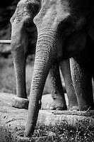 Hope Elephants in Hope, Maine Hope Elephants in Hope, Maine
