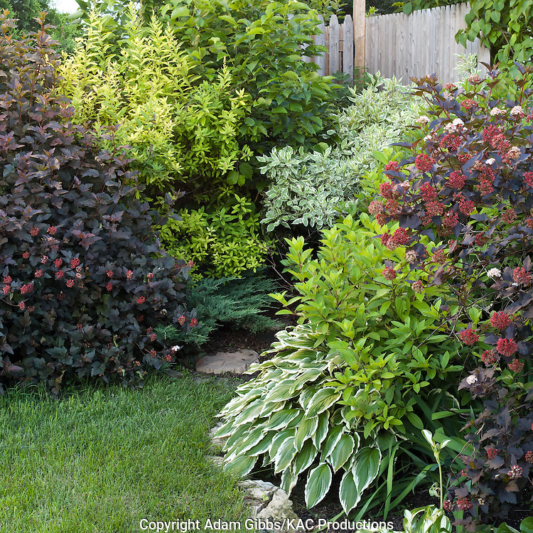 a colorful variety of shrubs and  a hosta