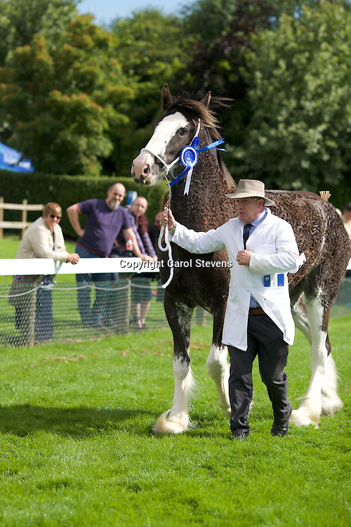 Martin Fountain's 3 yr old Black Filly<br />