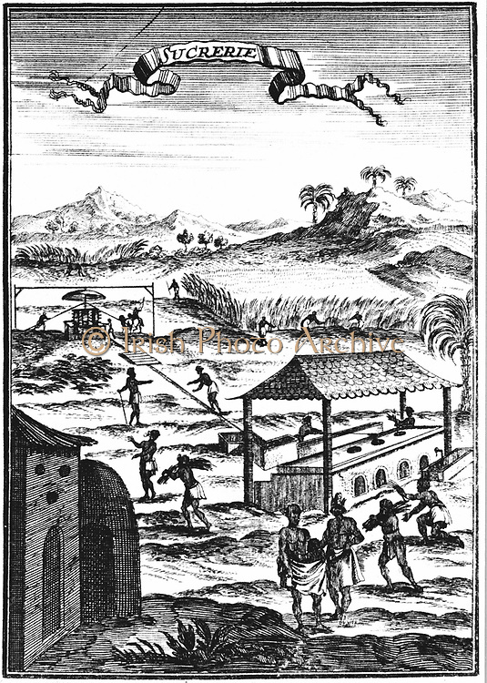 Sugar factory and plantation in the West Indies. Copperplate engraving from Allain Manesson Mallet 'Description de l'Univers …' Frankfurt-am-Main 1686. Cane crushed in horse or mule-powered mill with vertical rollers, centre left, juice gravity-fed to tanks by boiling house. Engraving.