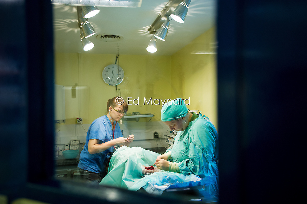 Vet and nurse in the operating theatre at Rushcliffe Veterinary Surgery, Nottingham, UK.