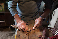 CETARA, ITALY - 10 March 2014: Antonio Polverino, a 64 years old peasant, cuts a sausage he made in his farmhouse in Cetara, a village of fishermans in the Amalfi Coast, Italy, on March 10th 2014.<br /> Antonio Polverino was interviewed by Daniele De Michele, aka Donpasta, a DJ-economist with a passion for gastronomy.