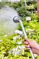 Close up of female gardener watering plants in garden shop