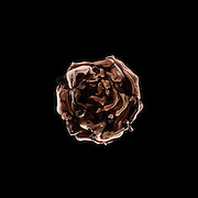 Human Nature Project, Rose
