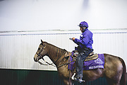November 1-3, 2018: Breeders' Cup Horse Racing World Championships. An outrider reads the racing form.