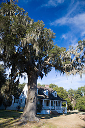 A large oak tree with spanish moss sits in front of the home on the grounds of the Charles Pinckney National Historic Site, near Charleston, South Carolina, United States of America.
