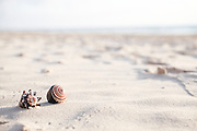 Seashells on the sand on a beach
