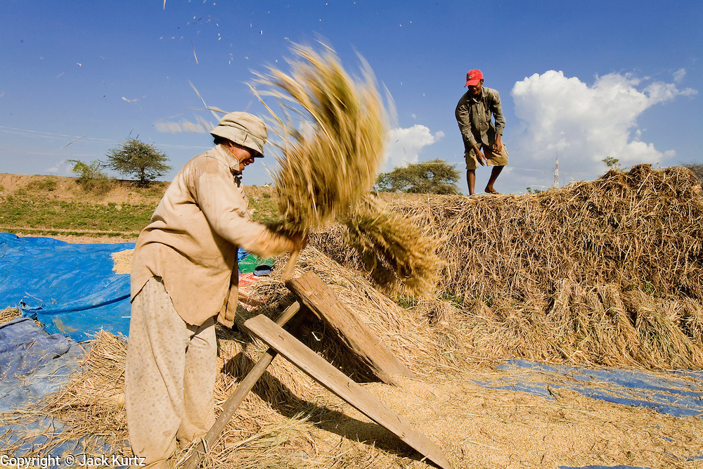16 MARCH 2006 - KAMPONG CHAM, KAMPONG CHAM, CAMBODIA: Threshing rice by hand in a paddy near the city of Kampong Cham on the Mekong River in central Cambodia. Photo by Jack Kurtz / ZUMA Press