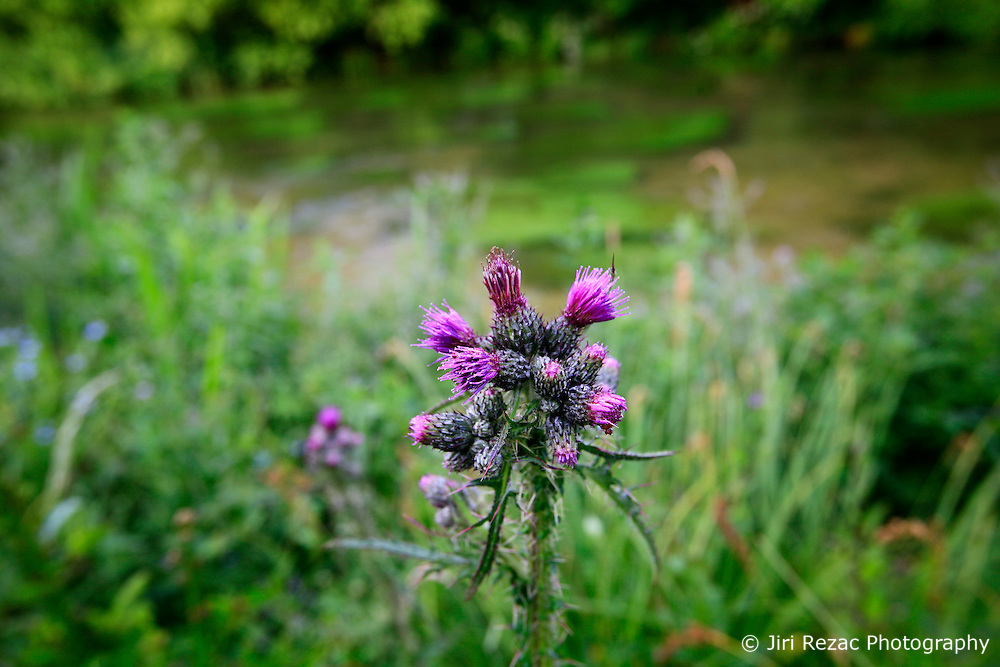UNITED KINGDOM HAMPSHIRE 17JUN09 - The chalkstream river Itchen at Ovington in Hampshire, southern England...The river has a total length of 28 miles, and is noted as one of England's - if not one of the World's - premier chalk streams. It is designated as a Site of Special Scientific Interest and is noted for its high quality habitats, supporting a range of protected species...jre/Photo by Jiri Rezac / WWF UK..© Jiri Rezac 2009