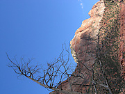 A dead tree frames the scene in this photograph of a red rock mountain standing tall with blue sky in the distance in Zion National Park on June 12, 2005 in Springdale, Utah. ©Paul Anthony Spinelli