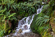 Stream & ferns on Routeburn Track in Fiordland National Park, near Te Anau, Southland region, South Island of New Zealand. In 1990, UNESCO honored Te Wahipounamu - South West New Zealand as a World Heritage Area.
