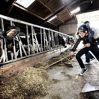 Nederland, Den Ilp , 12 april 2010..Kinderen van een z.g. zwarte school (school met kinderen van ouders van allochtone afkomst) uit Amsterdam West leren bij melkveehouderij Het Elenlenveld uit Ilpendam wat het is om in een agrarisch bedrijf te werken..Vele van deze kinderen hebben geen idee hoe het er aan toe gaat in een agrarisch bedrijf.Foto:Jean-Pierre Jans