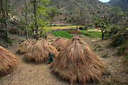 Harvested grass stored in hut like mounds, near Kishangarh, Rajasthan