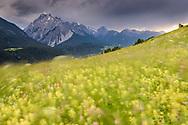 Spiel des Windes in einer Blumenwiesen mit Piz Pisoc an einem Frühlingstag im Juni an den Südhängen oberhalb des unterengadiner Dorfes Sent