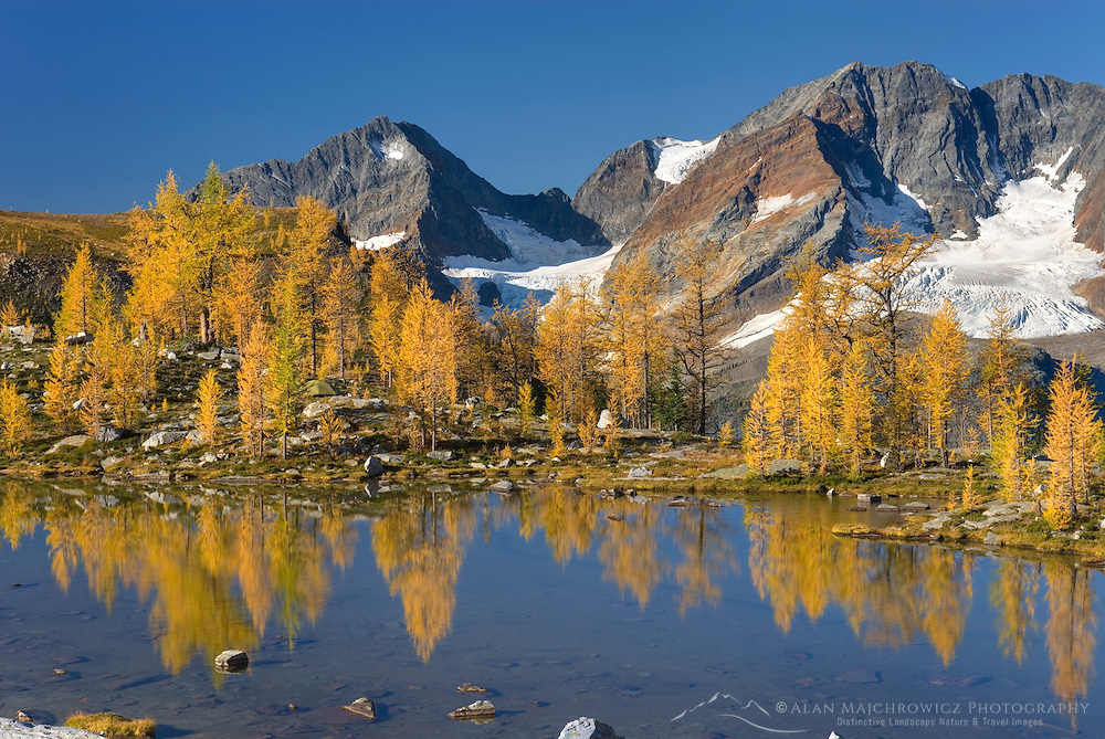 Mount Macbeth (10020 ft) 3054 m and alpine larches (Larix lyallii) reflected in tarn at Monica Meadows, Purcell Mountains British Columbia