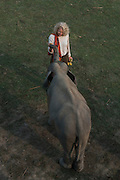 Asian elephant (Elephas maximus) & Renee Bish<br /> Kaziranga National Park<br /> Assam<br /> North East India<br /> UNESCO World Heritage Site<br /> ENDANGERED
