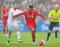 SWANSEA, WALES - Sunday, May 1, 2016: Liverpool's Daniel Sturridge in action against Swansea City during the Premier League match at the Liberty Stadium. (Pic by David Rawcliffe/Propaganda)