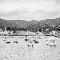 Panorama of Catalina Island Avalon Bay in black and white. Photo includes hillside buildings, businesses, and boats. Santa Catalina Island is part of Southern California in the United States.